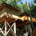 Baumhaushotels in Österreich: der Saurierpark Styrassic Park bietet Erlebnis-Übernachtungen für die ganze Familie (Ansicht Baumhaus Frecher Affe)