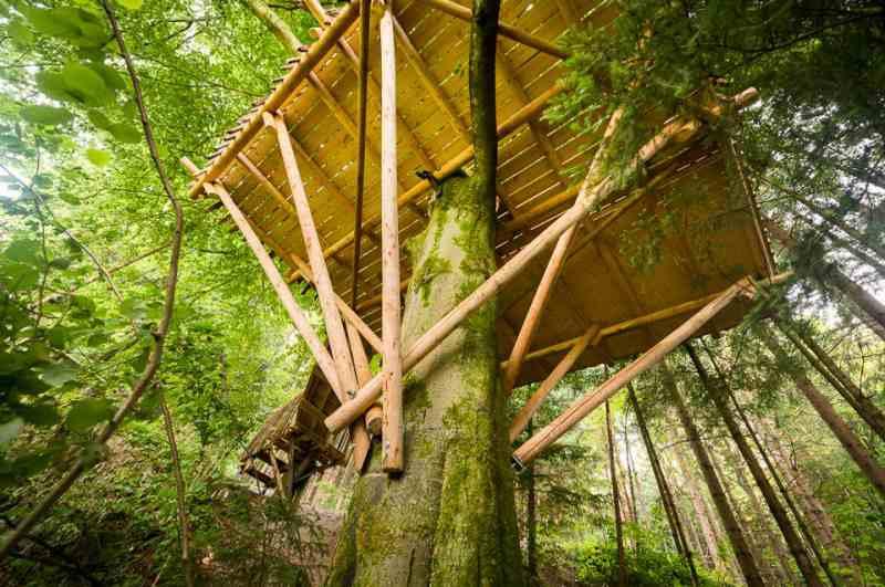 Baumhaushotels in Österreich: im Tierpark Buchenberg übernachten und mit den Wölfen heulen (Ansicht Baumhaus von unten)