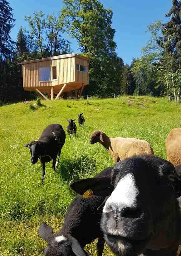 Baumhaushotels in Österreich: Baumhaus Goldegg mit Ziegen im Vordergrund